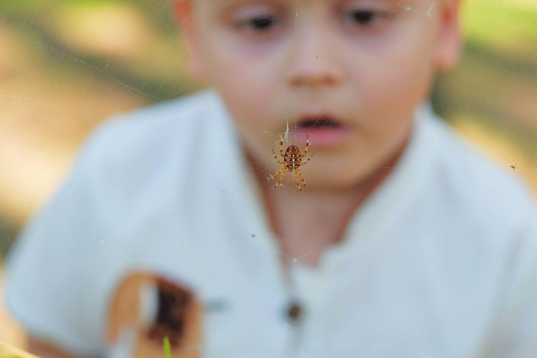 Ứng phó thế nào khi bị côn trùng cắn?