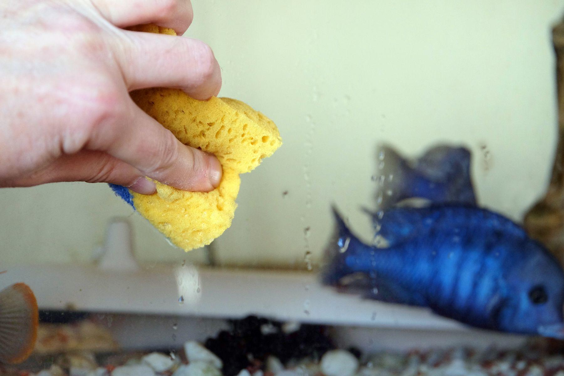 Como desinfectar una pecera facil y rapidamente