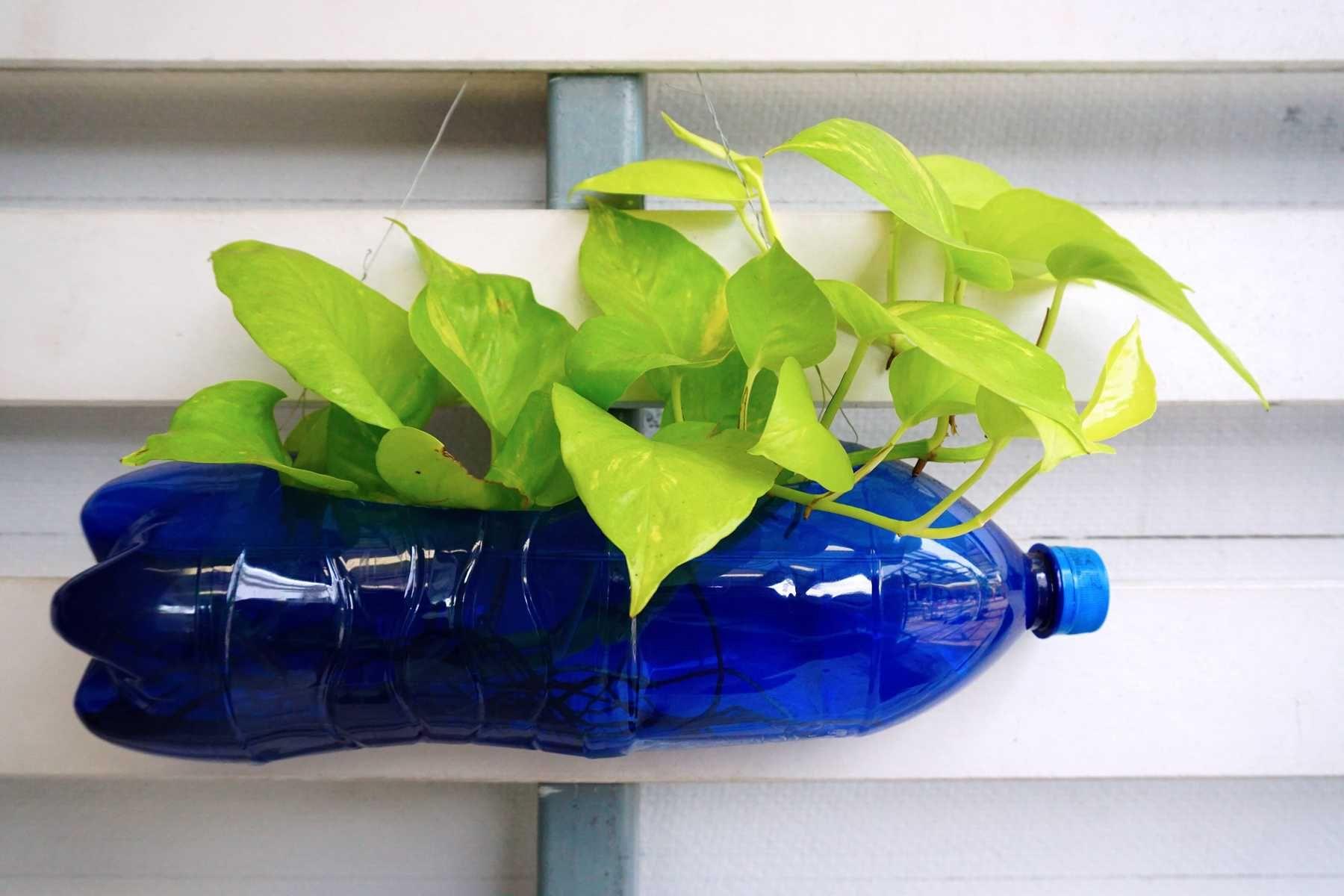 Những lưu ý khi tái chế chai nhựa làm chậu hoa