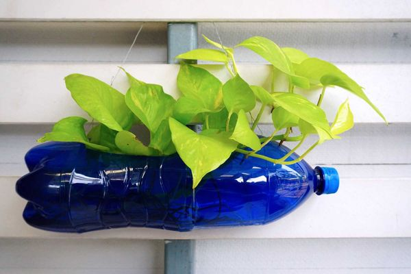 Những lưu ý khi tái chế và làm chậu hoa bằng chai nhựa