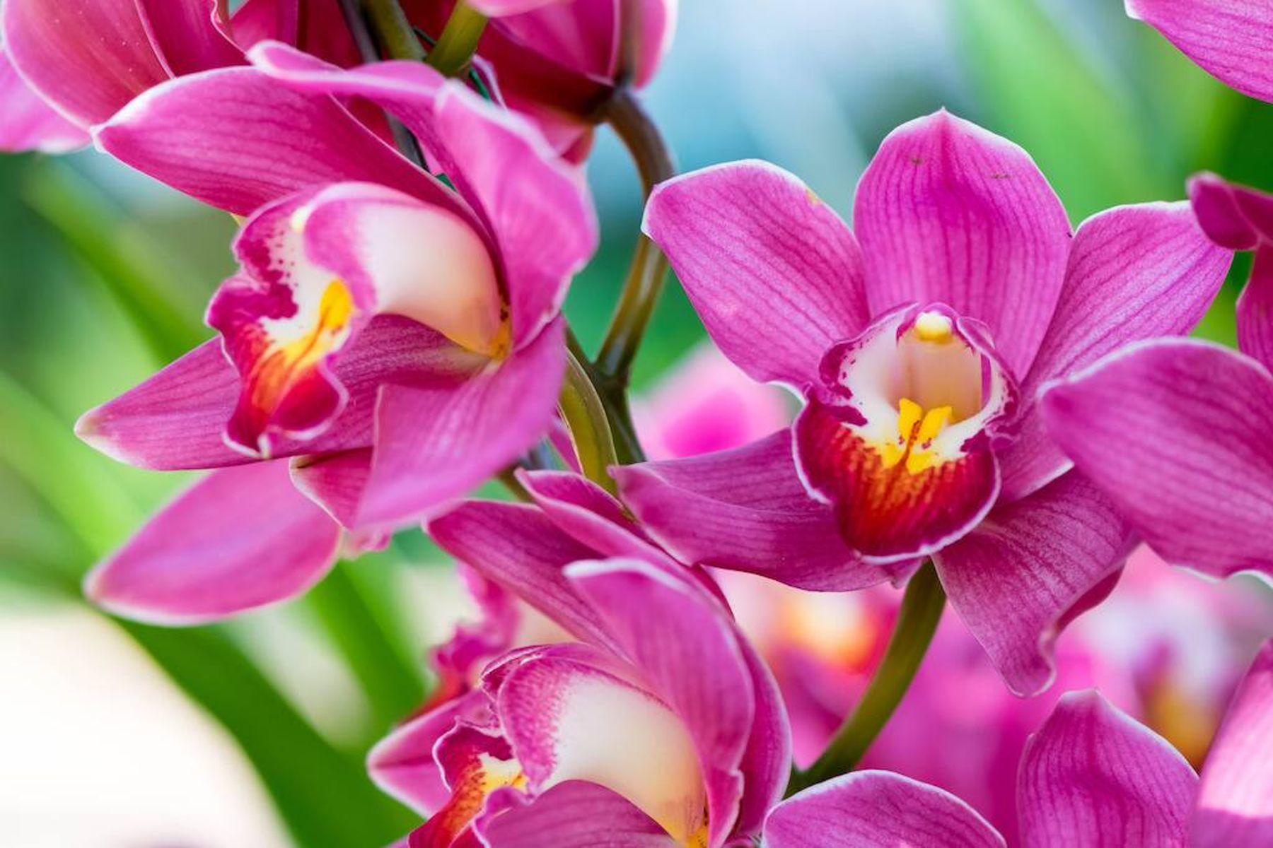 Bunga-bunga anggrek