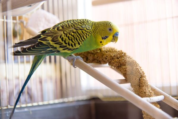 green and yellow parrot in a cage