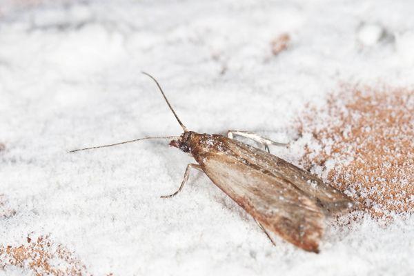 Moth-eaten patterned carpet