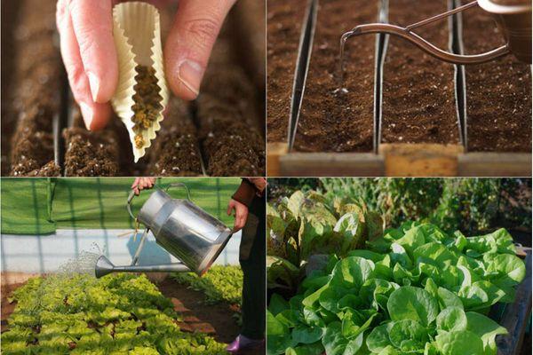 Cách trồng rau tại nhà sạch và an toàn