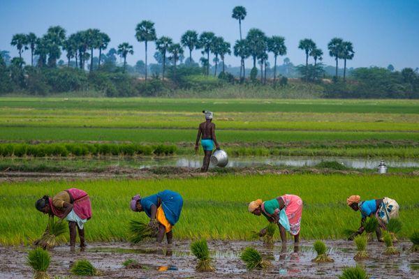 7 Mô hình kinh doanh tại gia cho phụ nữ nông thôn khởi nghiệp