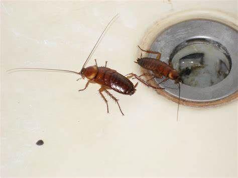 Do bụi bẩn, xác côn trùng hoặc động vật chết làm tắc nghẽn cống