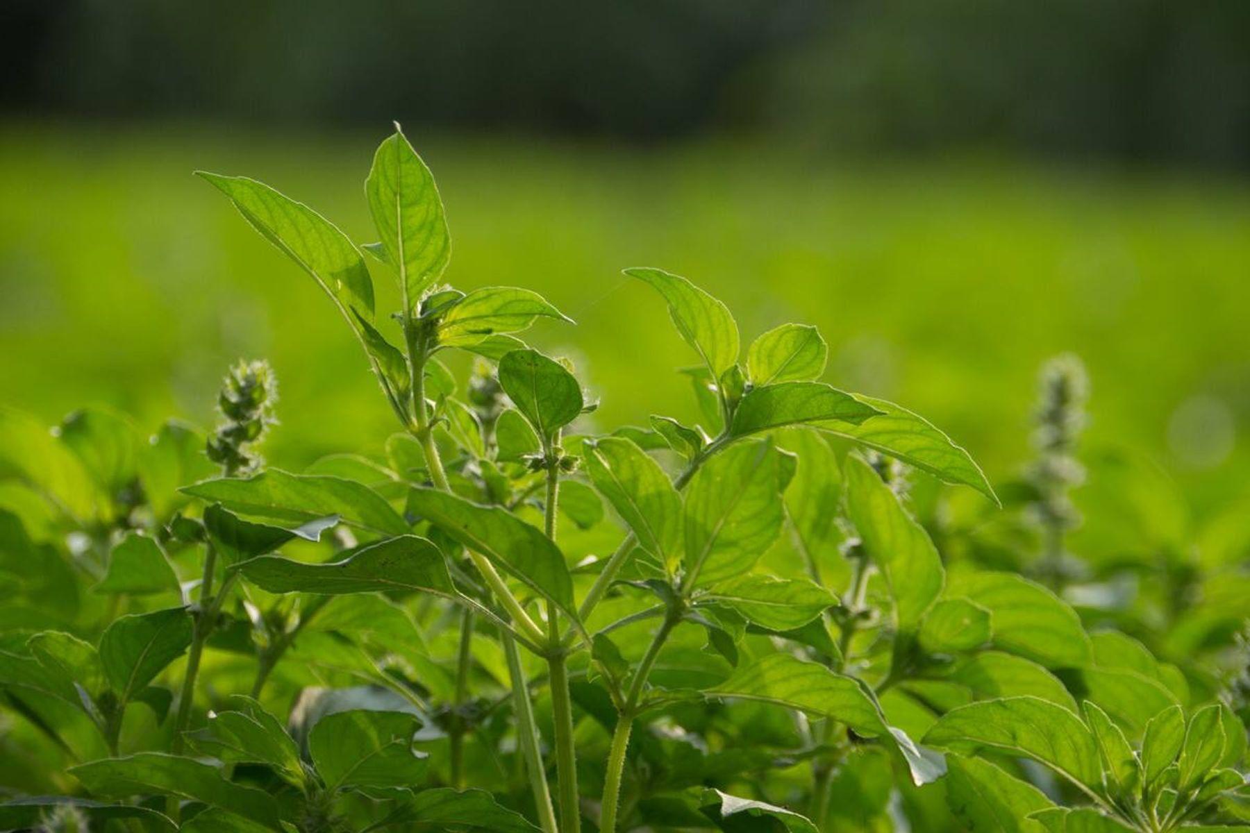 Cách trồng rau sạch tại nhà đơn giản và tươi tốt