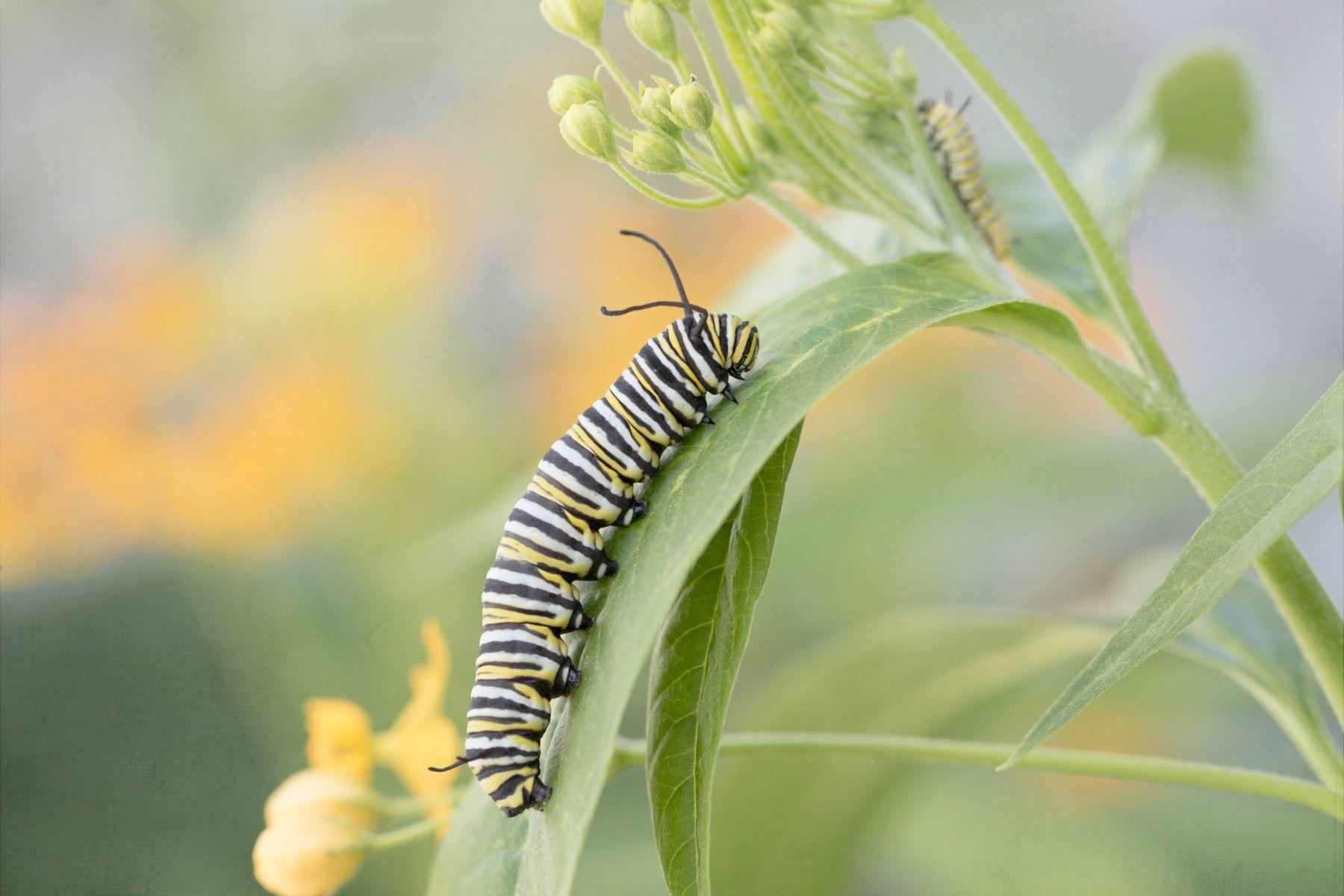 a caterpillar climbing up a leaf