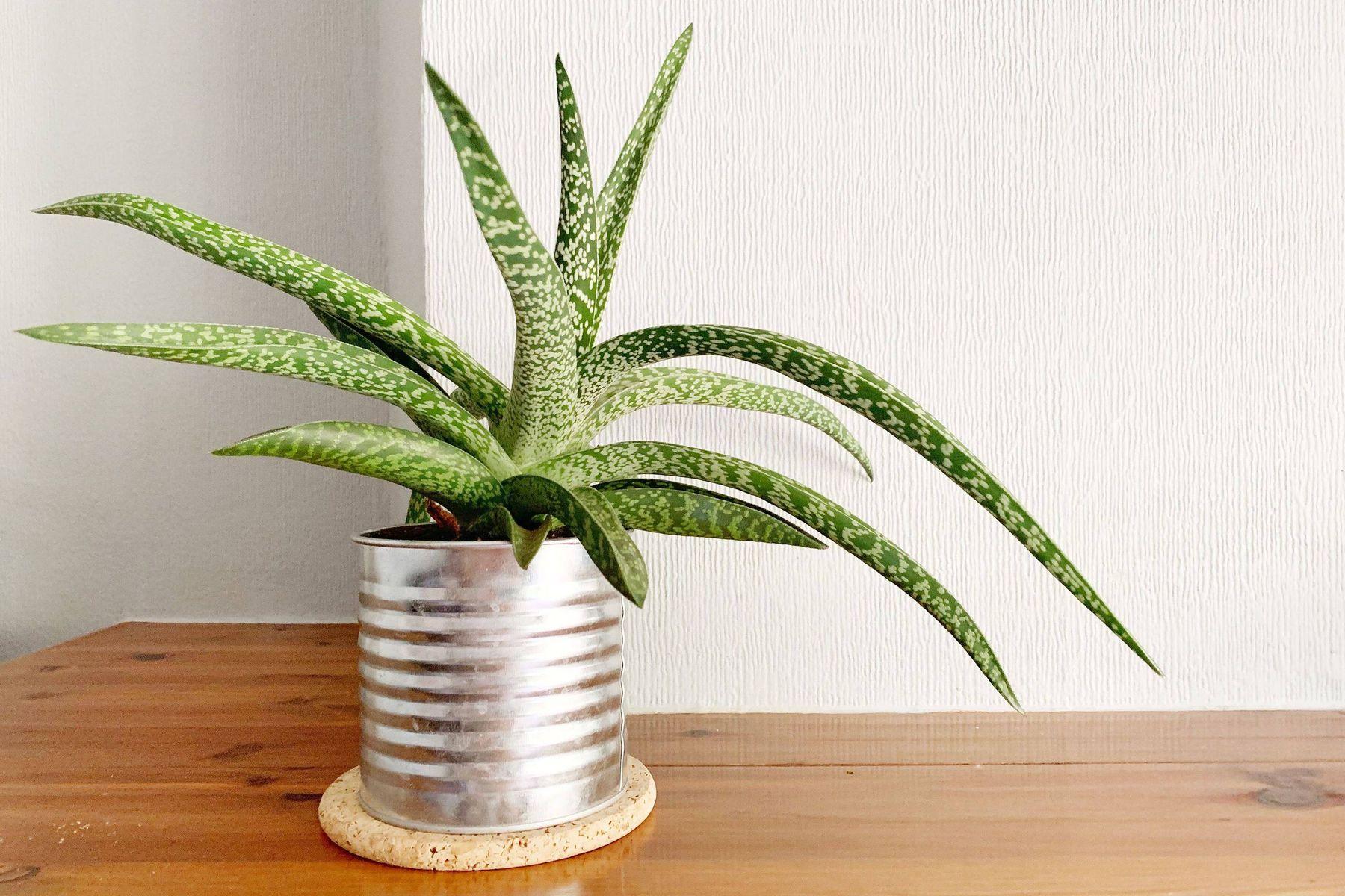 plante en pot en étain recyclé