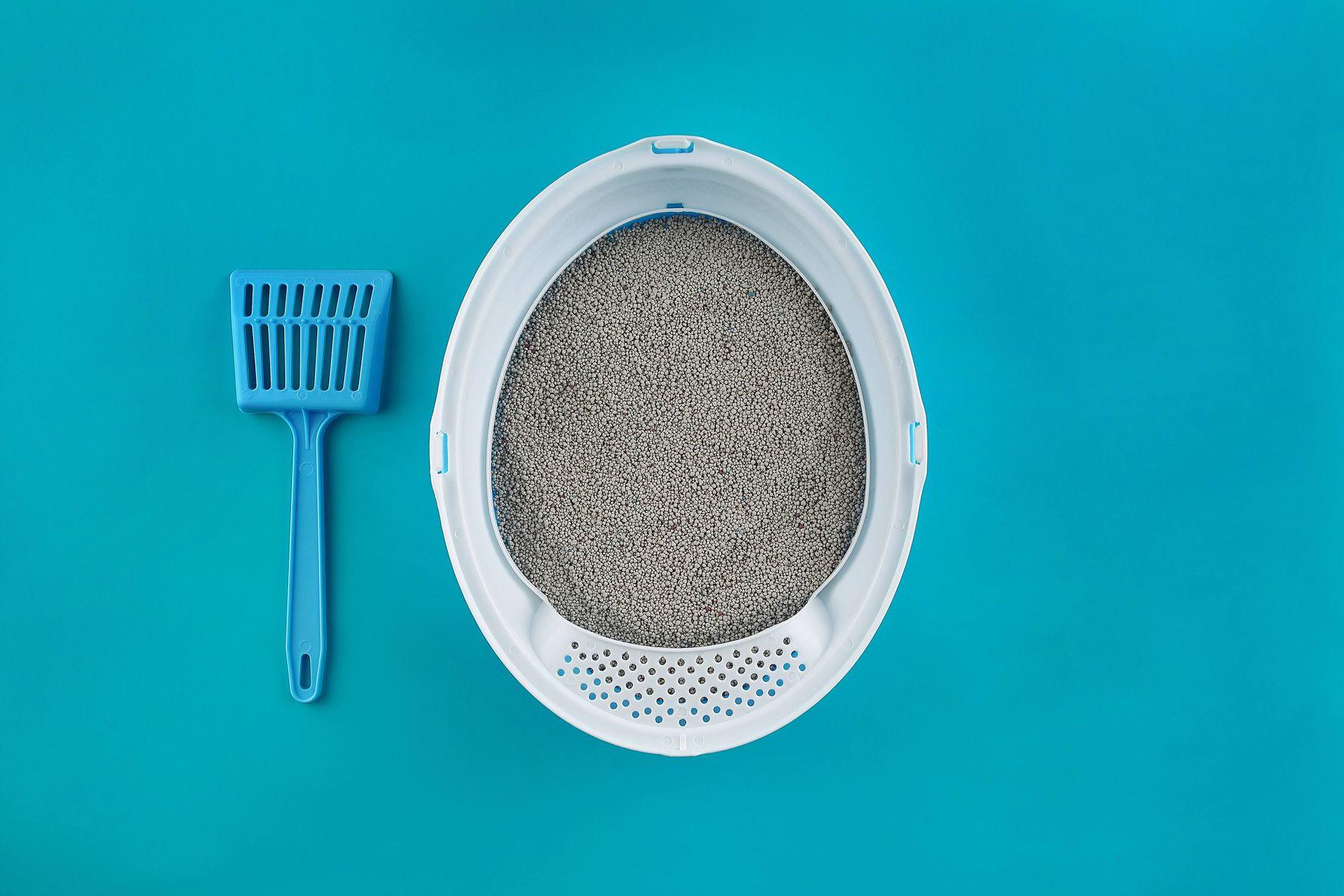Haustier Sandbecken und blaue Reinigungsschaufel