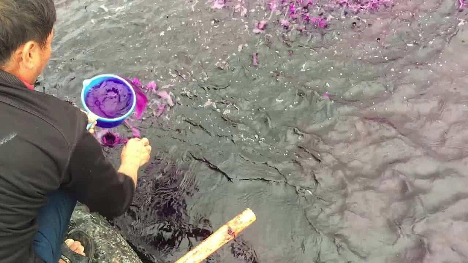 Thuốc tím khử trùng, sát khuẩn cho cá