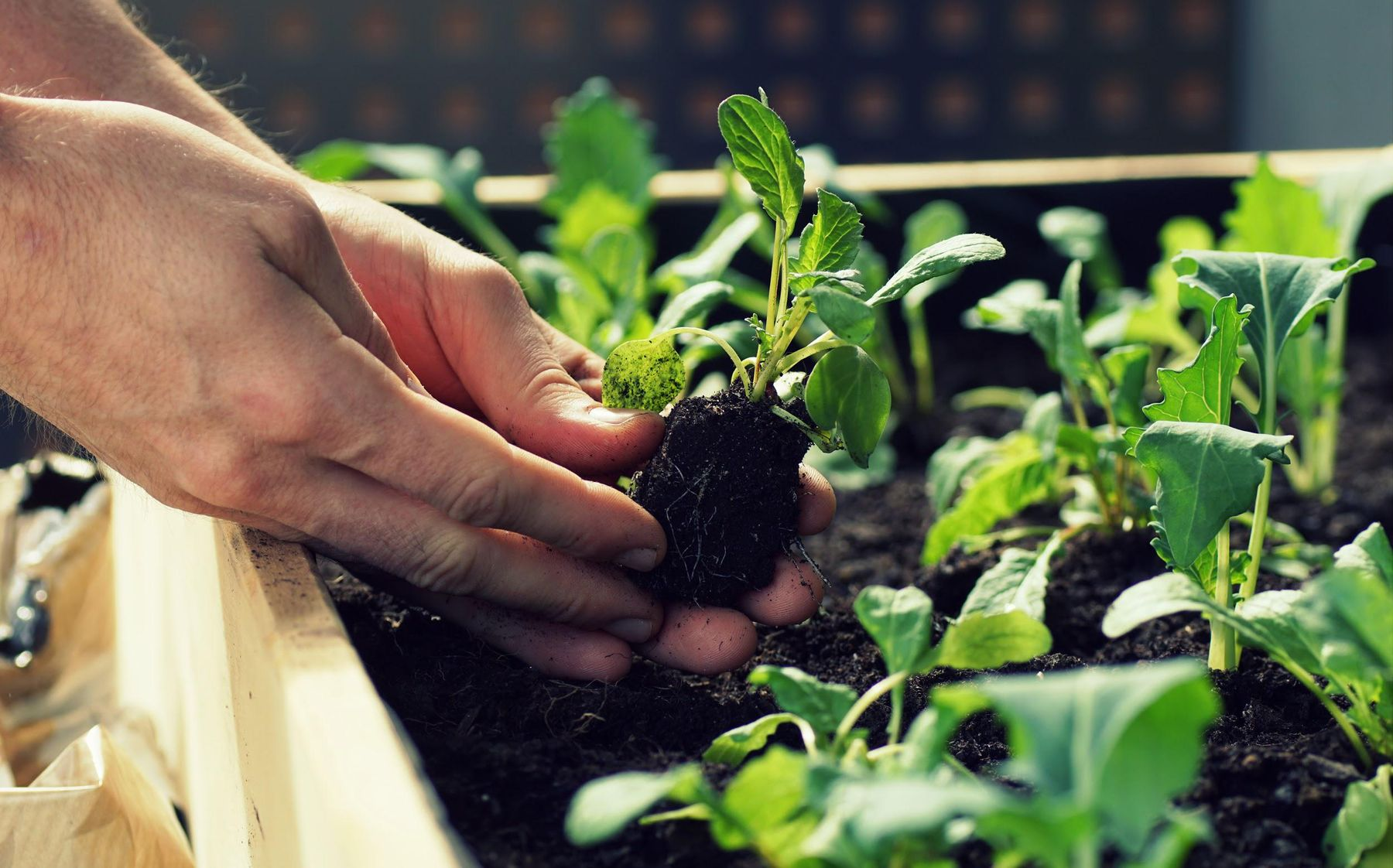 Step 5: Mão plantando uma mudinha na terra