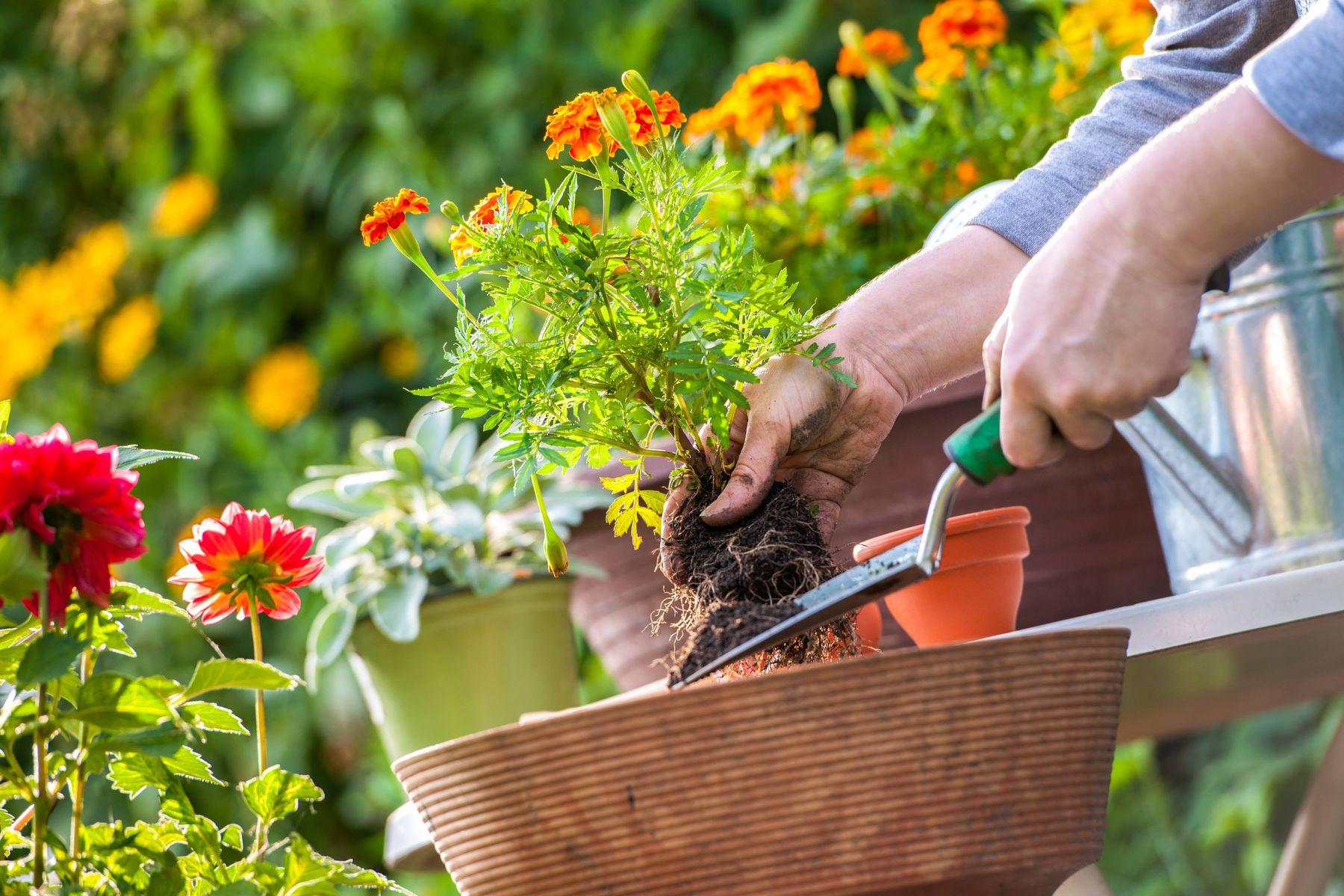 Sonbahar ve Kış Bitkileri Hangileridir?