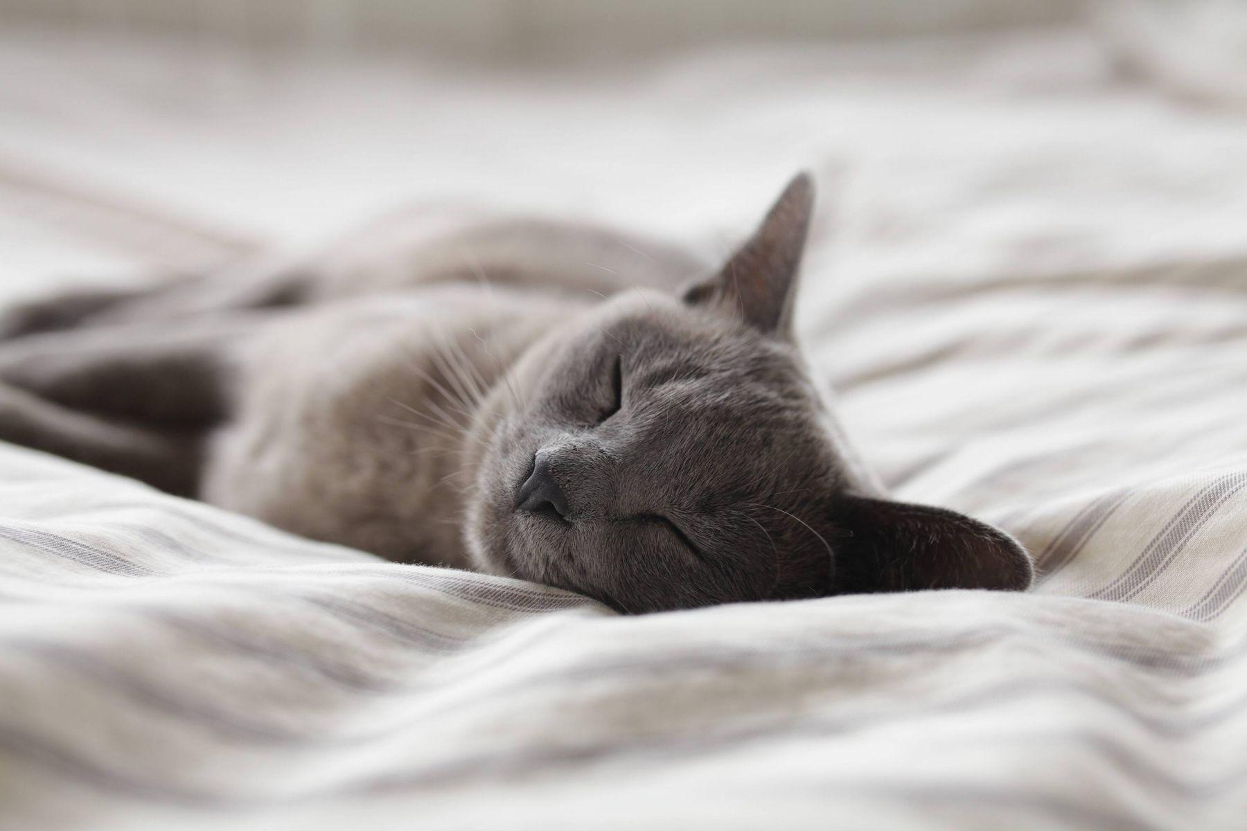 Kedi Yatağı Nasıl Yapılır?