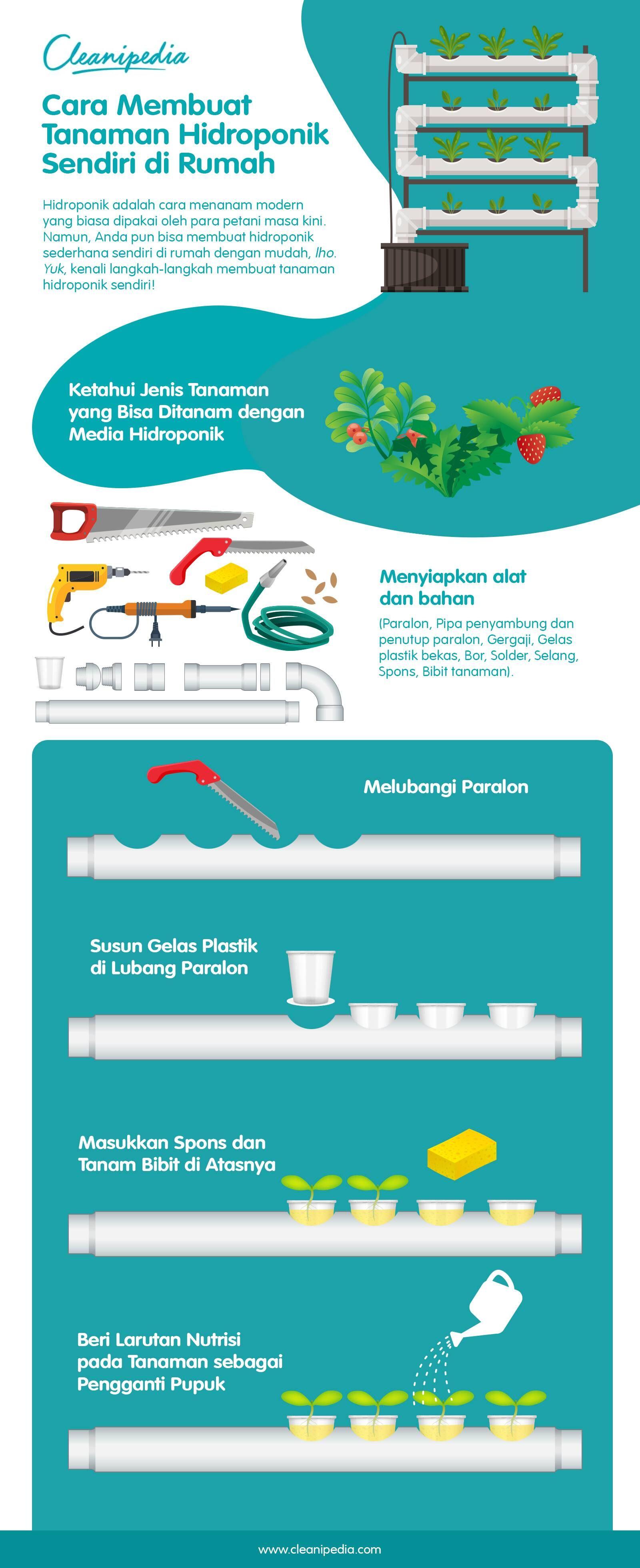 Infografik: Cara Membuat Tanaman Hidroponik Sendiri di Rumah