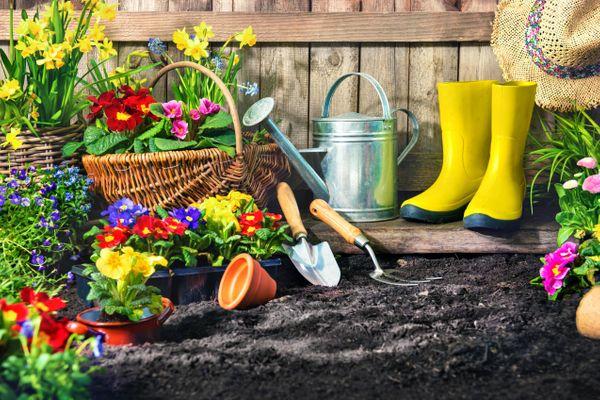 Yeni Başlayanlar İçin Evde Çiçek Bakımı Rehberi