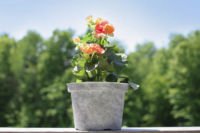 Tái chế chậu hoa bằng nhựa giả đá