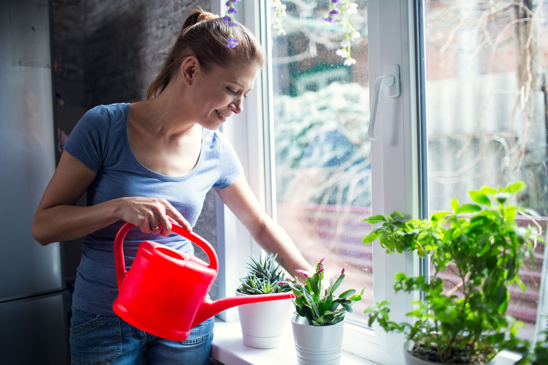 too many mosquitoes in your home here are 5 plants that naturally act as mosquitoes repellents