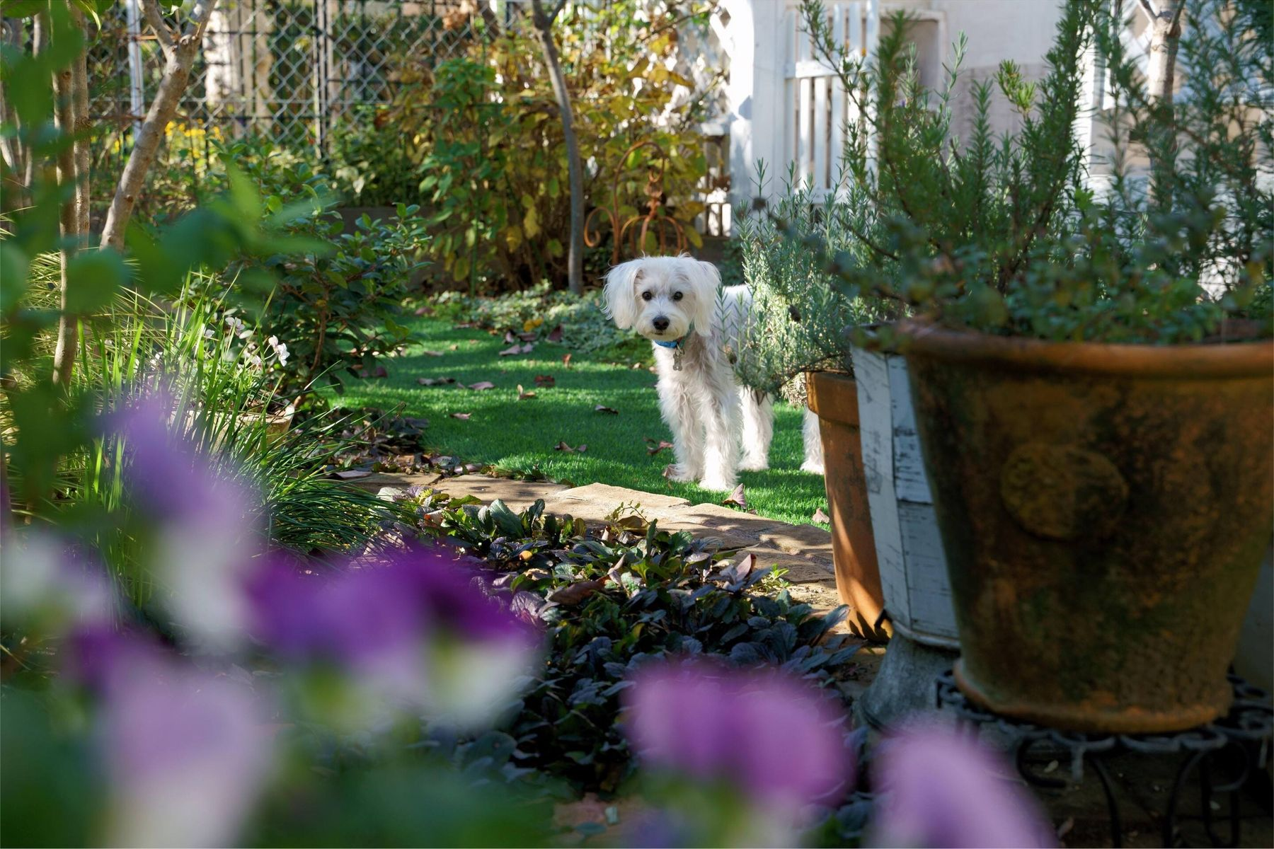 dog in garden with dog friendly plants