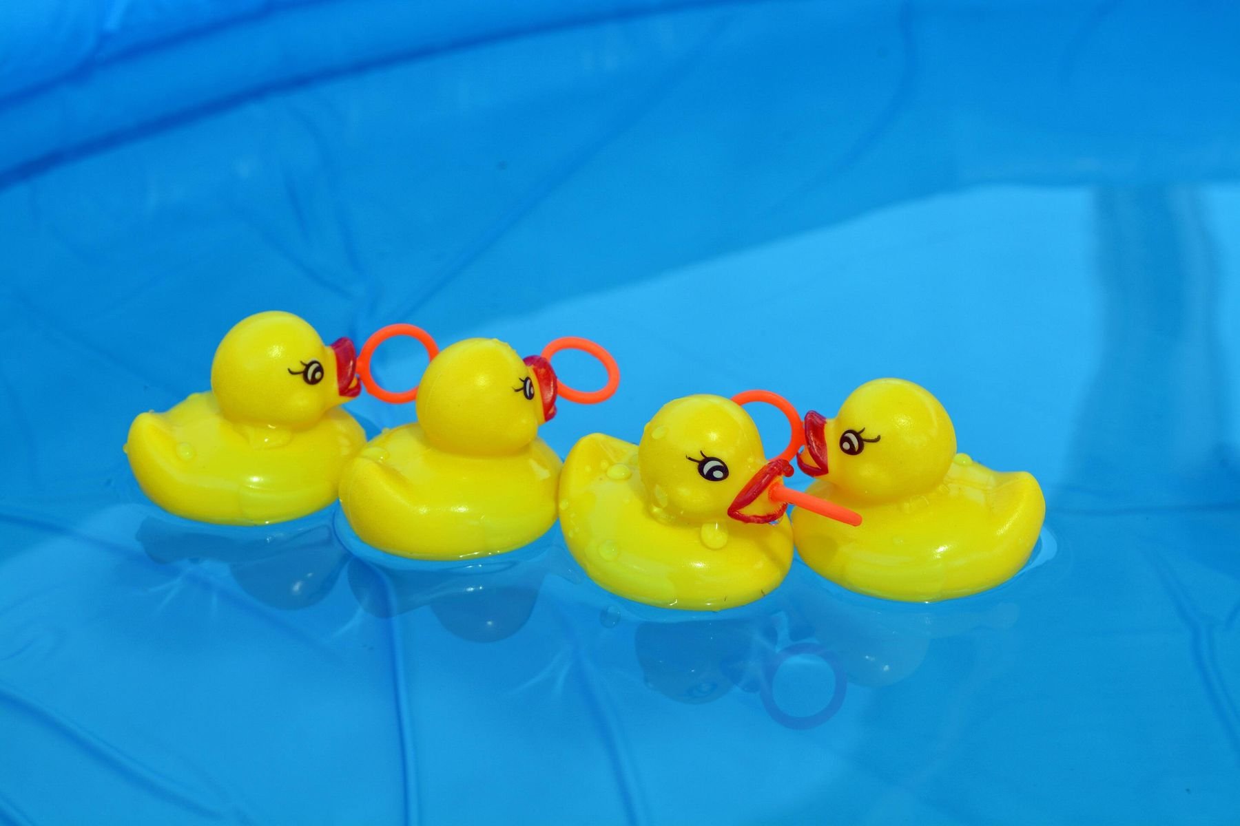 Ducks floating in a paddling pool