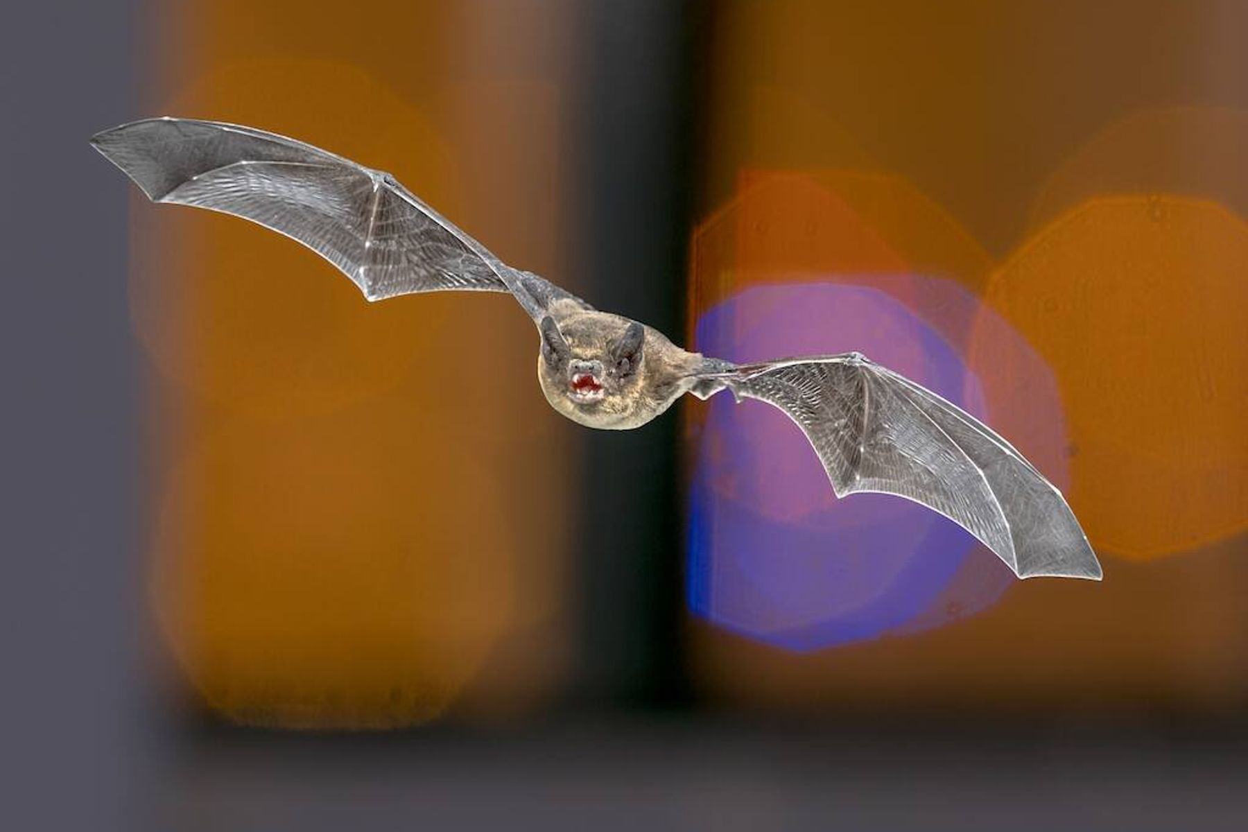 a picture of a bat in front of a blurry background