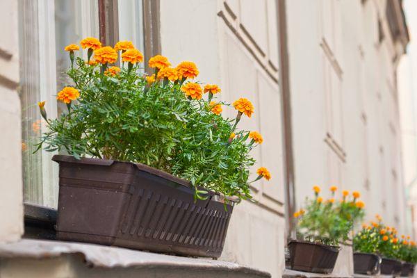 Tết nên chưng hoa gì để rước tài lộc vào nhà?