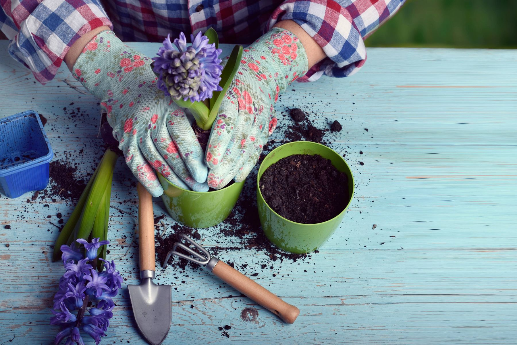 a woman in colourful clothes repotting a flower in humus soil
