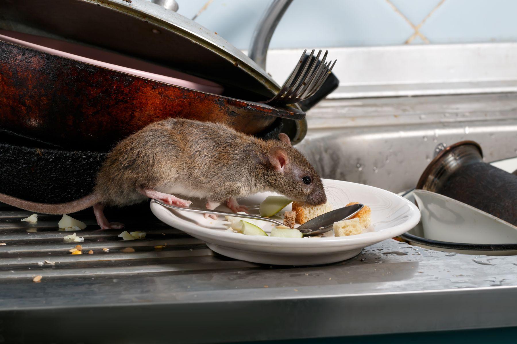 fare nasıl yok edilir