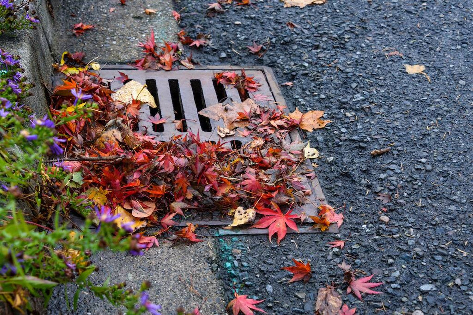 Outside drain grate blocked with leaves