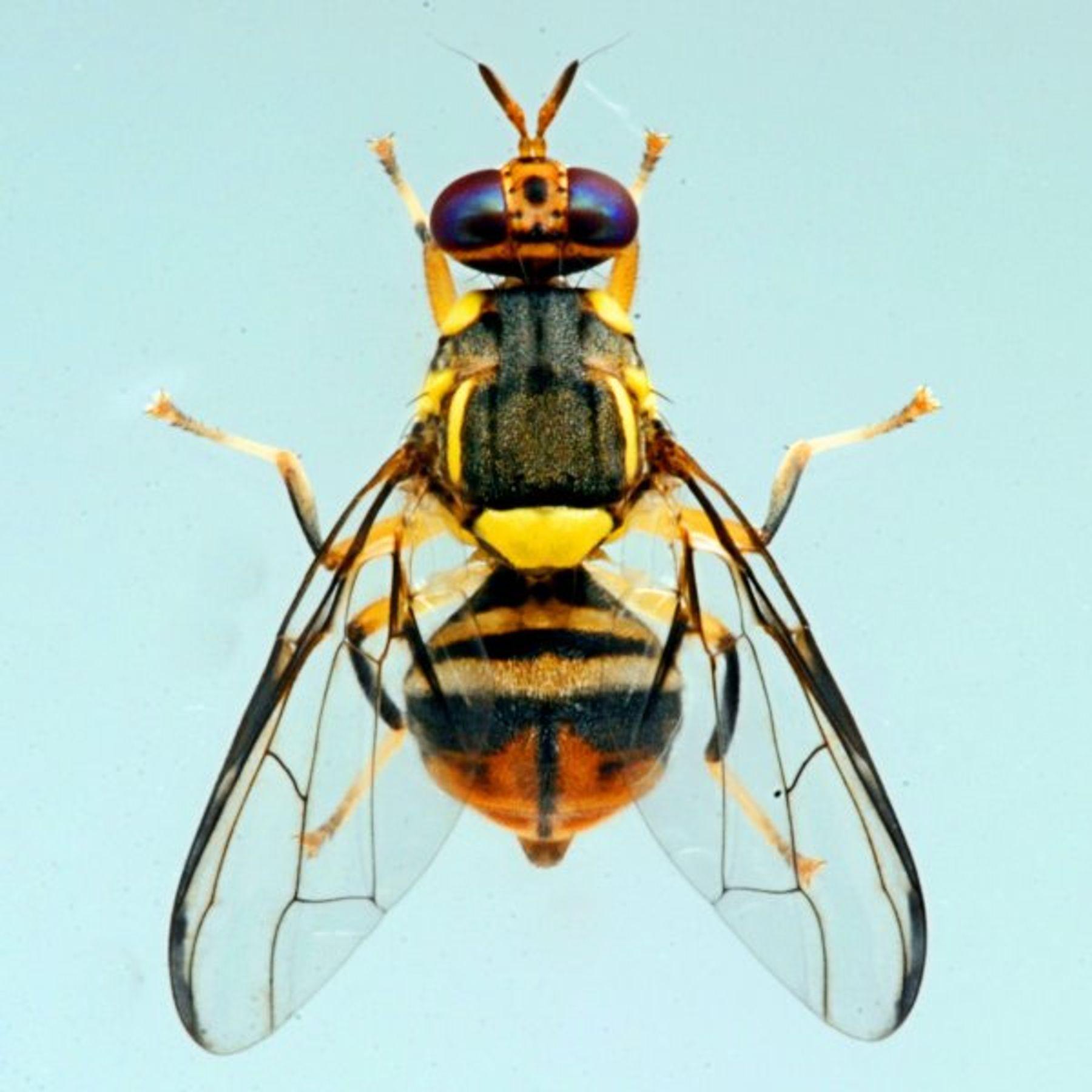 Step 10: Cách đuổi ruồi vàng bằng băng phiến hiệu quả