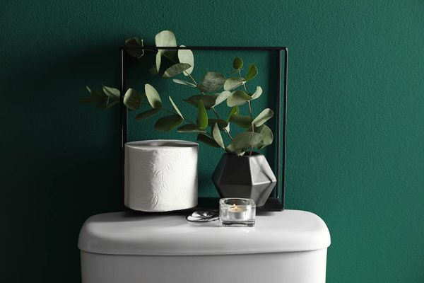top of a toilet cistern with toilet paper and a plant