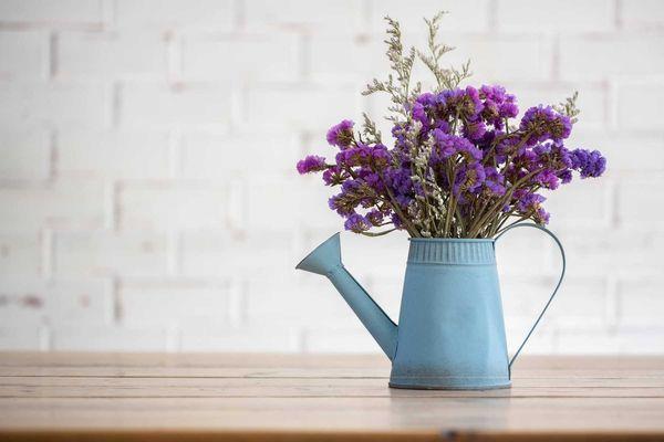 trồng cây hoa lavender trong nhà
