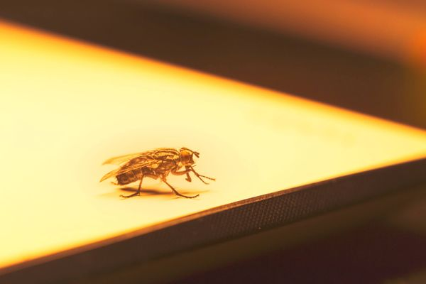 How to Get Rid of Houseflies at Home | Get Set Clean