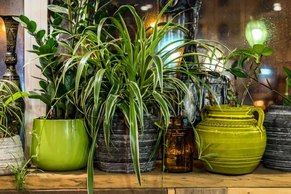 How to Save your Dying Houseplant | Cleanipedia