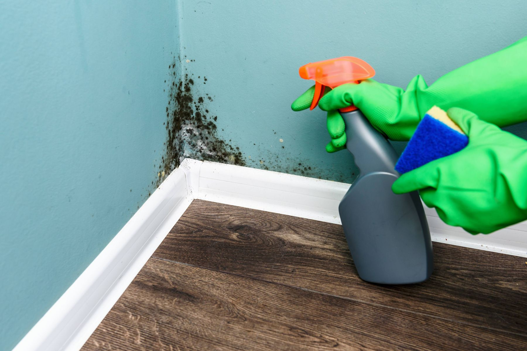 How to Get Rid of Mould in your Home | Cleanipedia