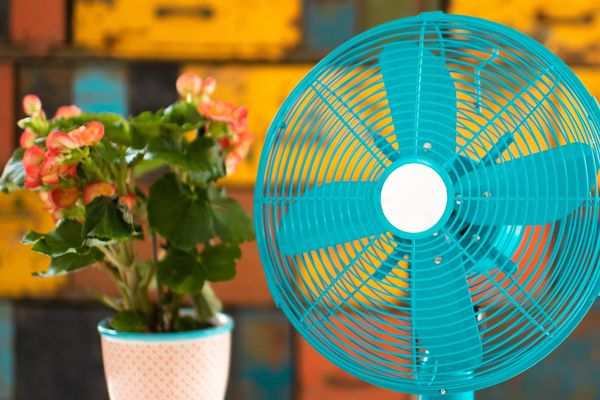 fan and a plant