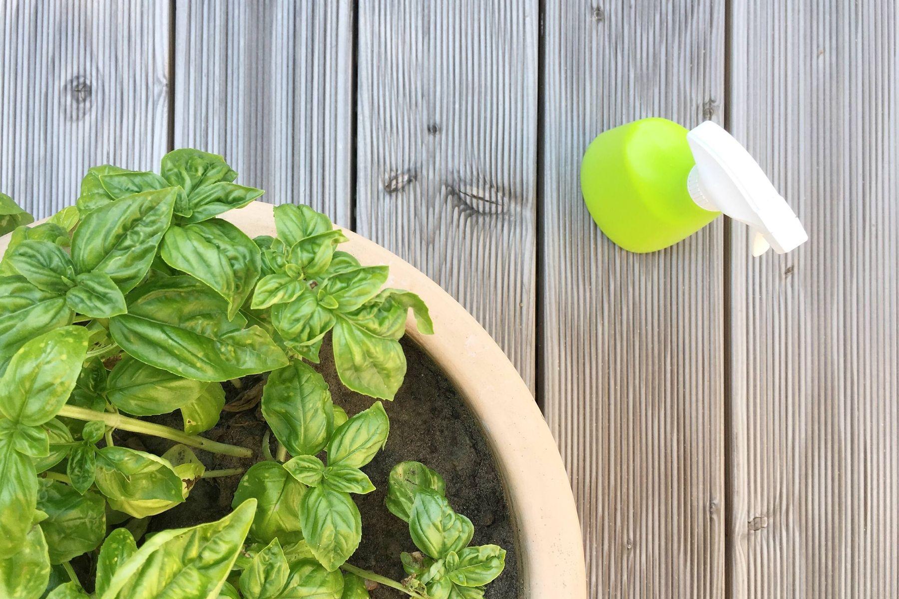 cách khử mùi nhà vệ sinh bằng cây xanh lọc không khí