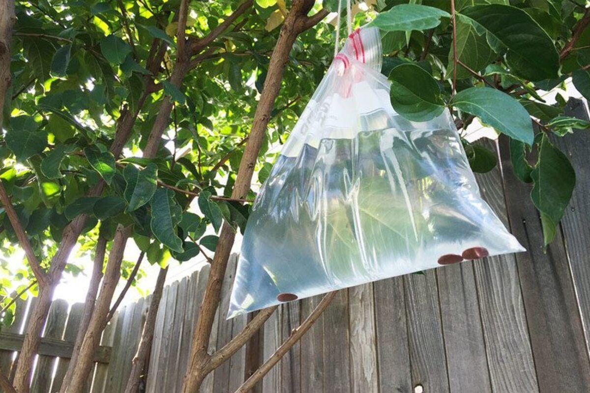 Cách diệt ruồi bằng túi nước trong