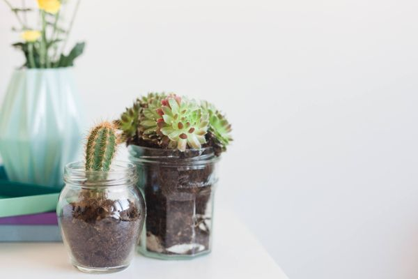 recycled glass pots like potted plants