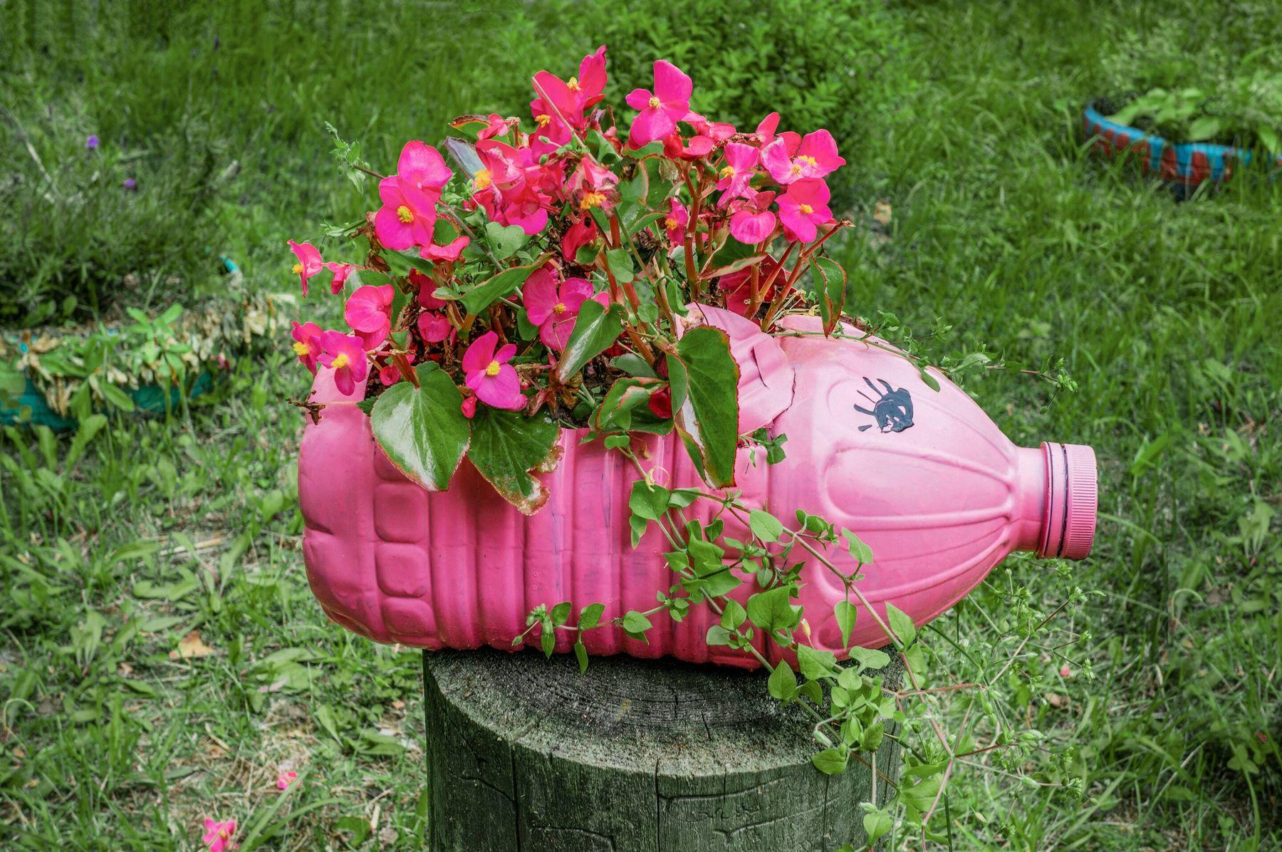 Cách tái chế chai nhựa trồng hoa hình con heo