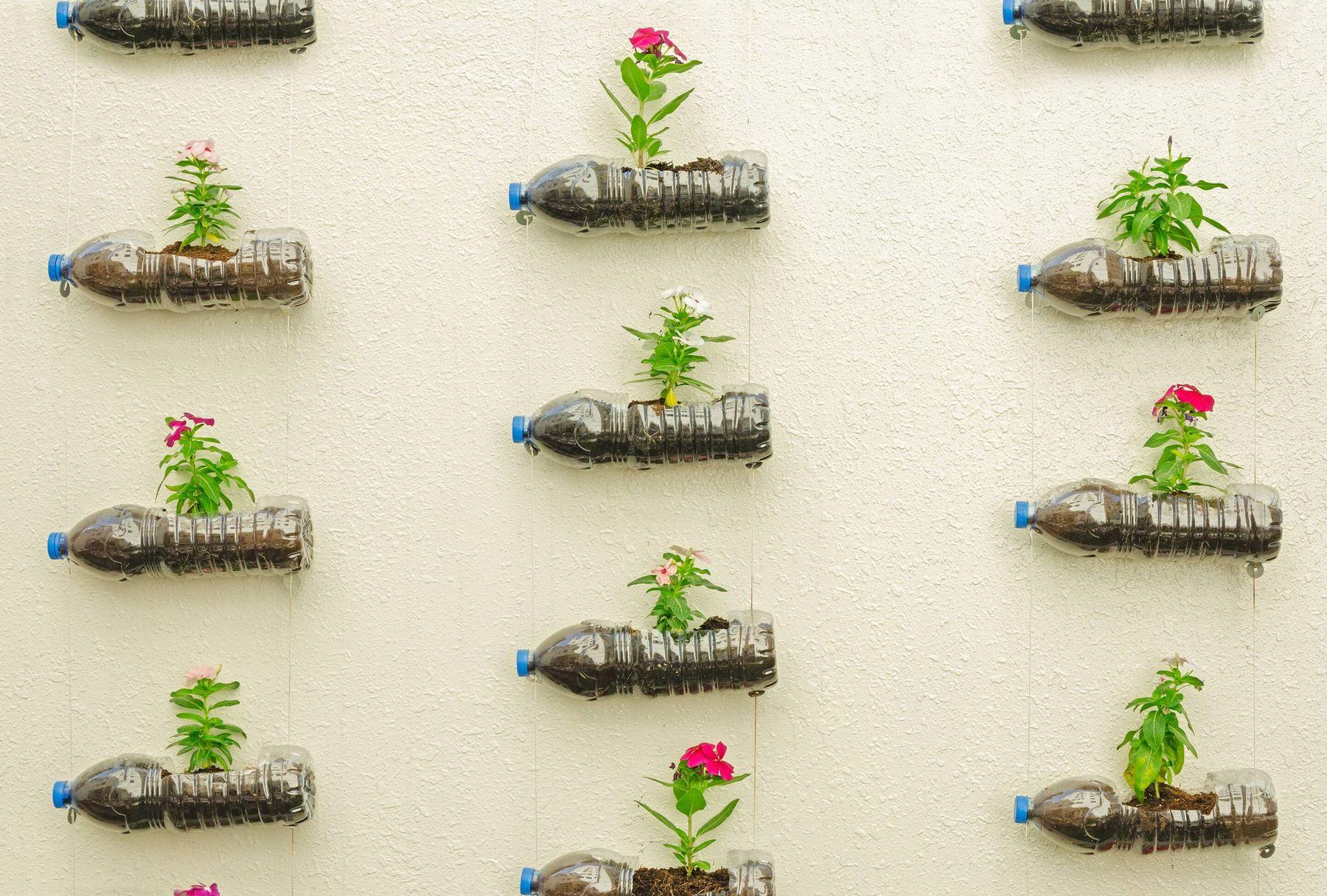 Cách tái chế chai nhựa thành chậu trồng rau giàn treo trang trí ban công