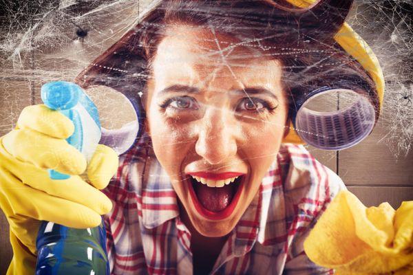 Bao nhiêu lâu thì nên quét mạng nhện một lần?