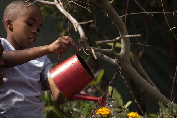 Có thể dùng nước thải sinh hoạt tưới cây được không?