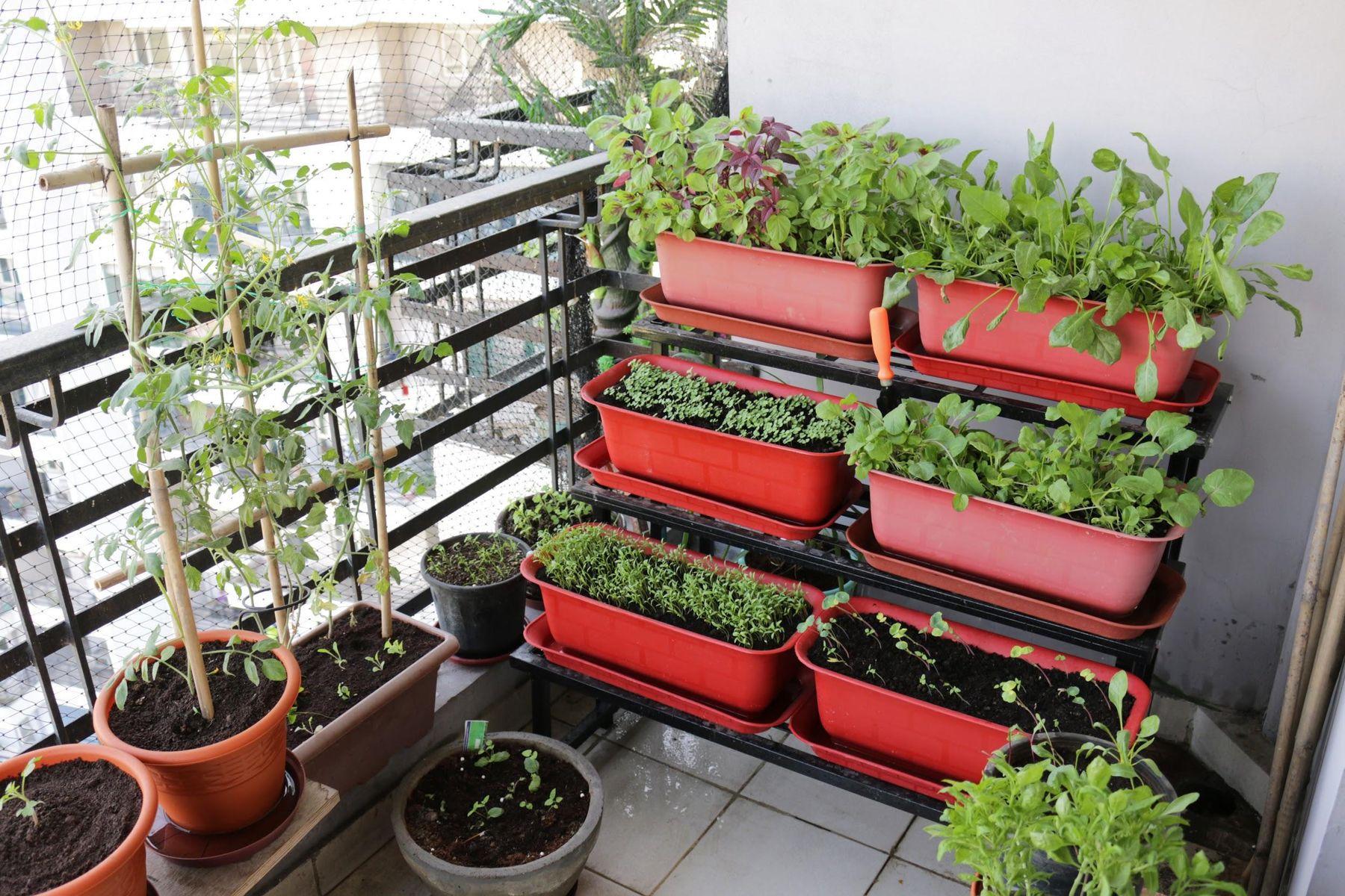 Step 1: Horta na varanda de casa