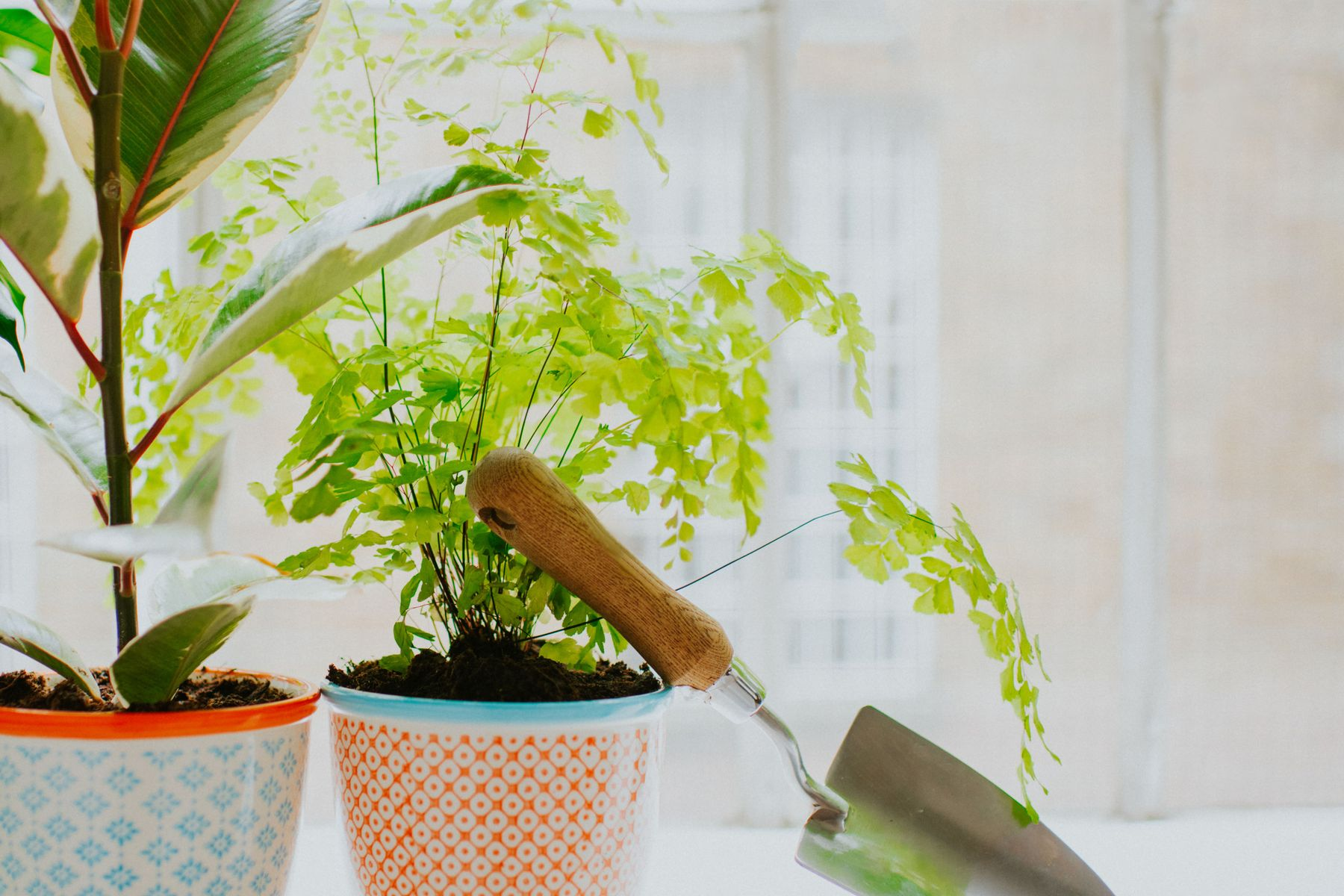 Plants and foliage with a garden spade for a DIY terrarium