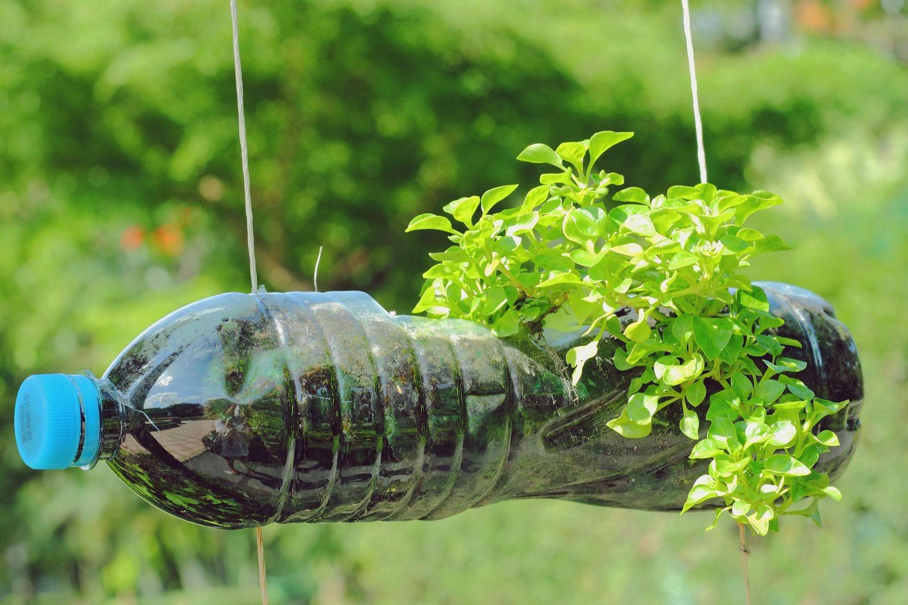 Step 4: Vaso feito com garrafa pet e planta