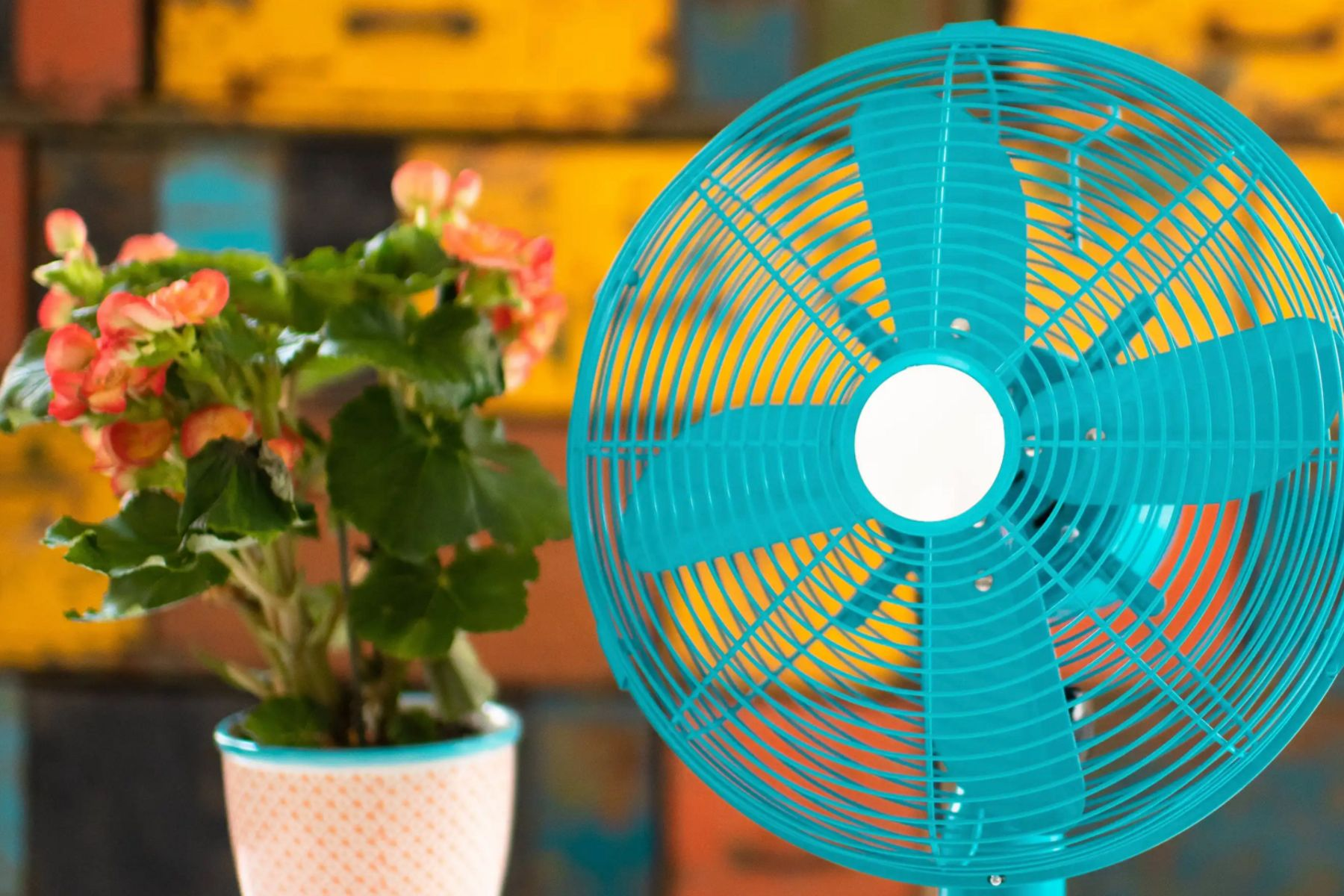 A blue fan next to some potted plants