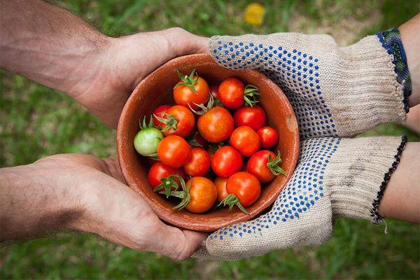 Cách chọn và bảo quản thực phẩm khô bạn cần biết
