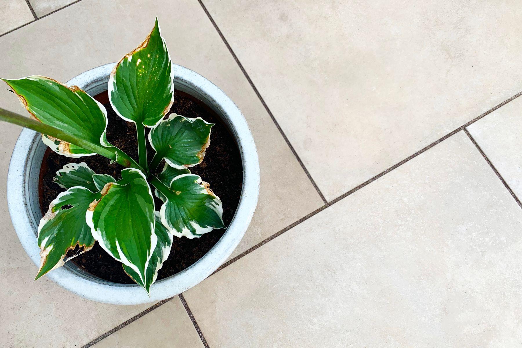 Porcelanato bege com vaso de planta de folhagens verdes em cima