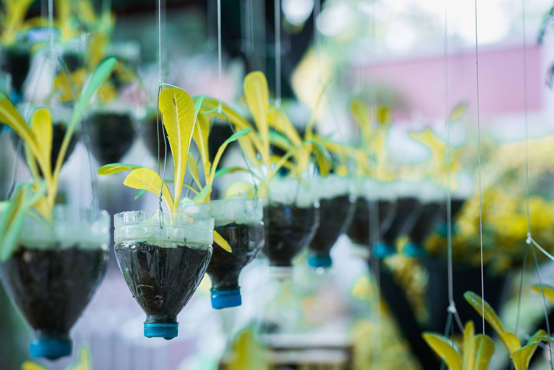 Cách tái chế chai nhựa trồng rau